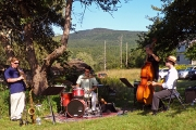 Music Under the Trees